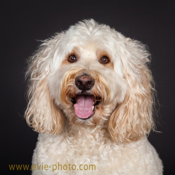 2016-0921-dog-photography-boulder-evie-photography-1028